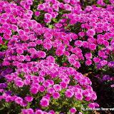 10-26-14 Dallas Arboretum - _IGP4310.JPG