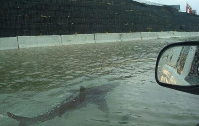 A Photoshopped image shows a shark swimming through floodwaters on a freeway in Houston, Texas, 27 August 2017. Photo: Jason Michael / Twitter
