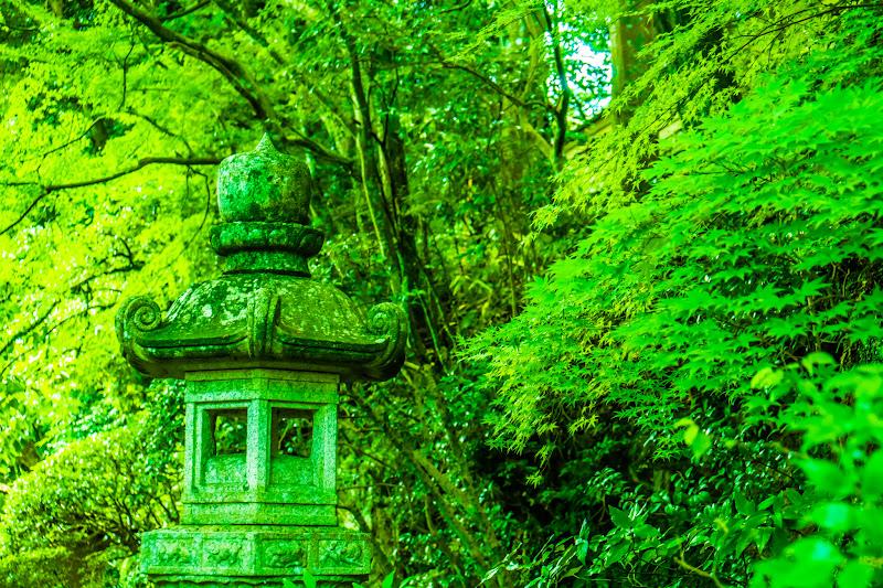 臥龍山荘 庭園 4