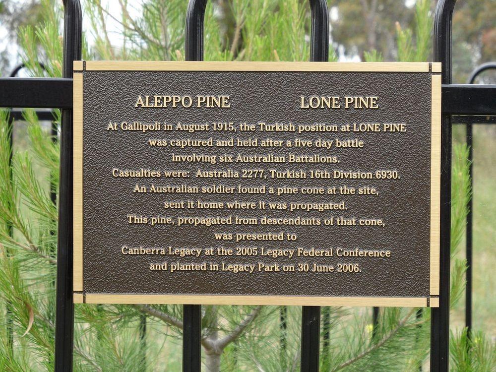 gallipoli-lone-pine-tree-1