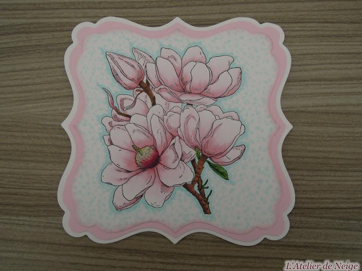 042 - Magnolia