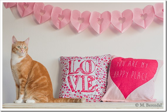 Teddy_Valentine_18