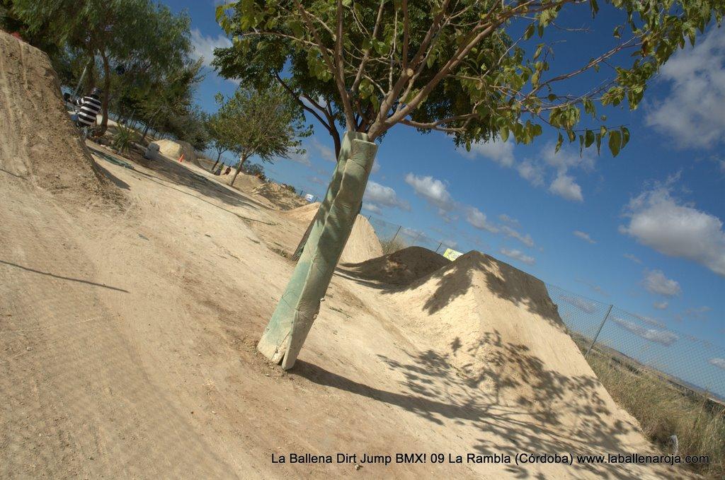 Ballena Dirt Jump BMX 2009 - BMX_09_0008.jpg