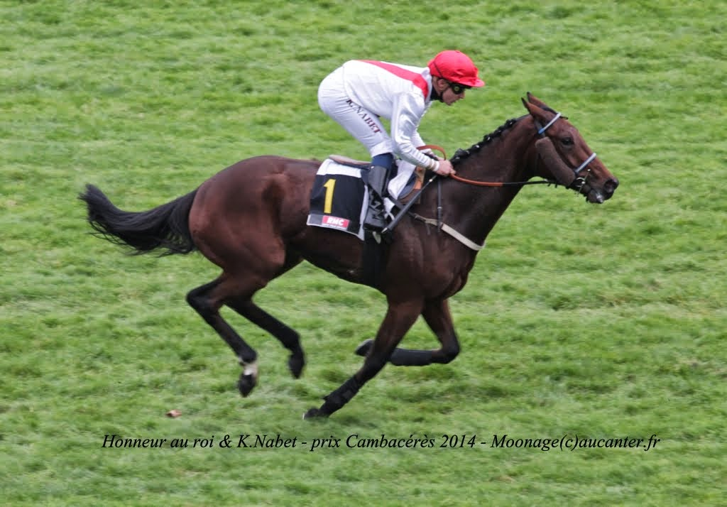 Photos Auteuil 2-11-2014 (48h de l'obstacle) IMG_5364