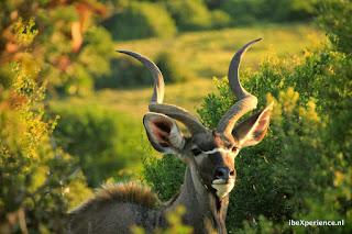 Zuid Afrika Karoo