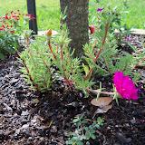 Gardening 2010, Part Two - 101_2235.JPG