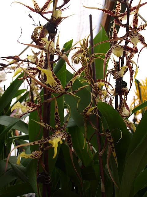Растения из Тюмени. Краткий обзор P1011392