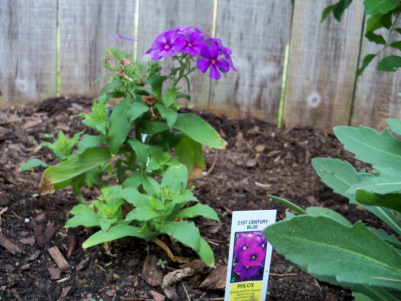 Gardening 2011 - 100_6792.JPG