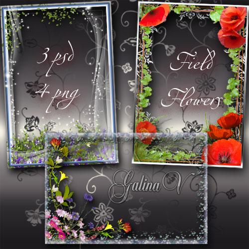 Рамки для фото - Нежные полевые цветы