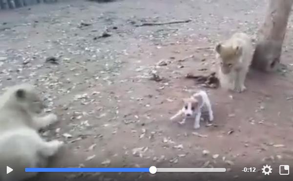 Thả chó vào chuồng sư tử
