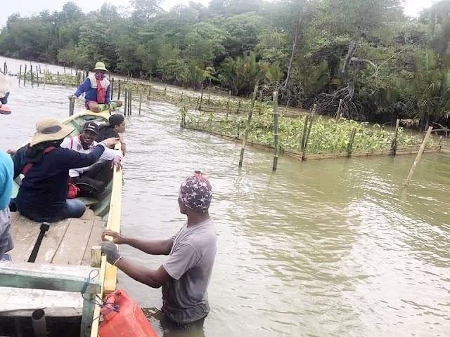 Berharap Pelestarian Mangrove di Pulau Burung Dapat Kalpataru