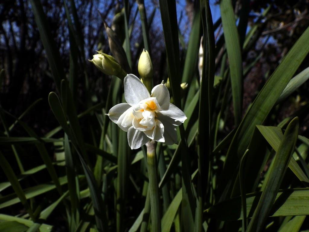 花の写真 正面