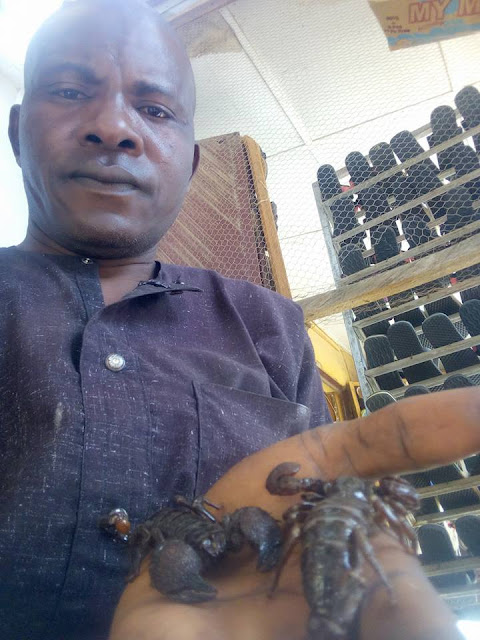 Man Poses With His Pets, A Python And Scorpions In Borno State