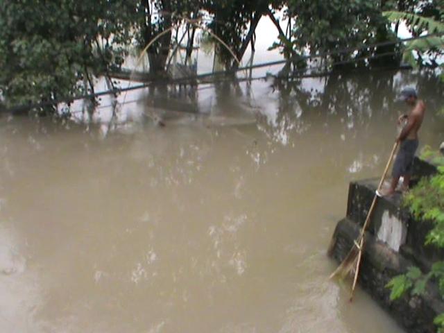 Luapan Sungai Konto Rendam Puluhan Hektar Tanaman Padi