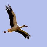 Vogels en dieren - IMG_7271.JPG
