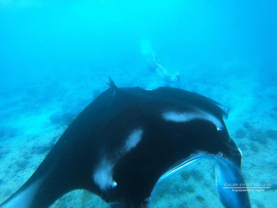 NADAR COM MANTAS (raias gigantes) no Atol Malé Norte das Maldivas | Maldivas