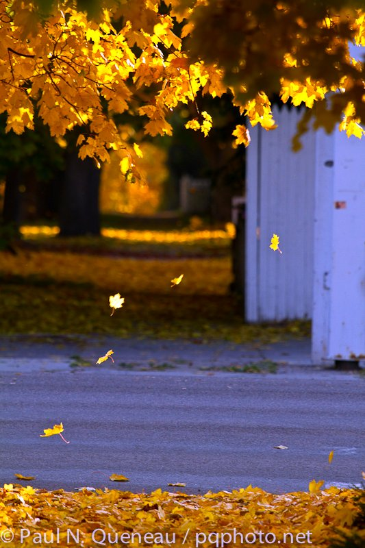 After a late-October cold snap, Missoula's annual leaf expo ends abruply in a shower of gold.