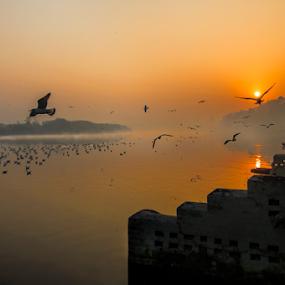 Sunrise  by Kallol Bhattacharjee - Landscapes Sunsets & Sunrises ( reflection, winter, red, fog, sunrise, nikon, tokina )