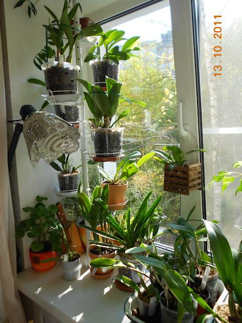 Размещение орхидей - Страница 5 DSCN1068