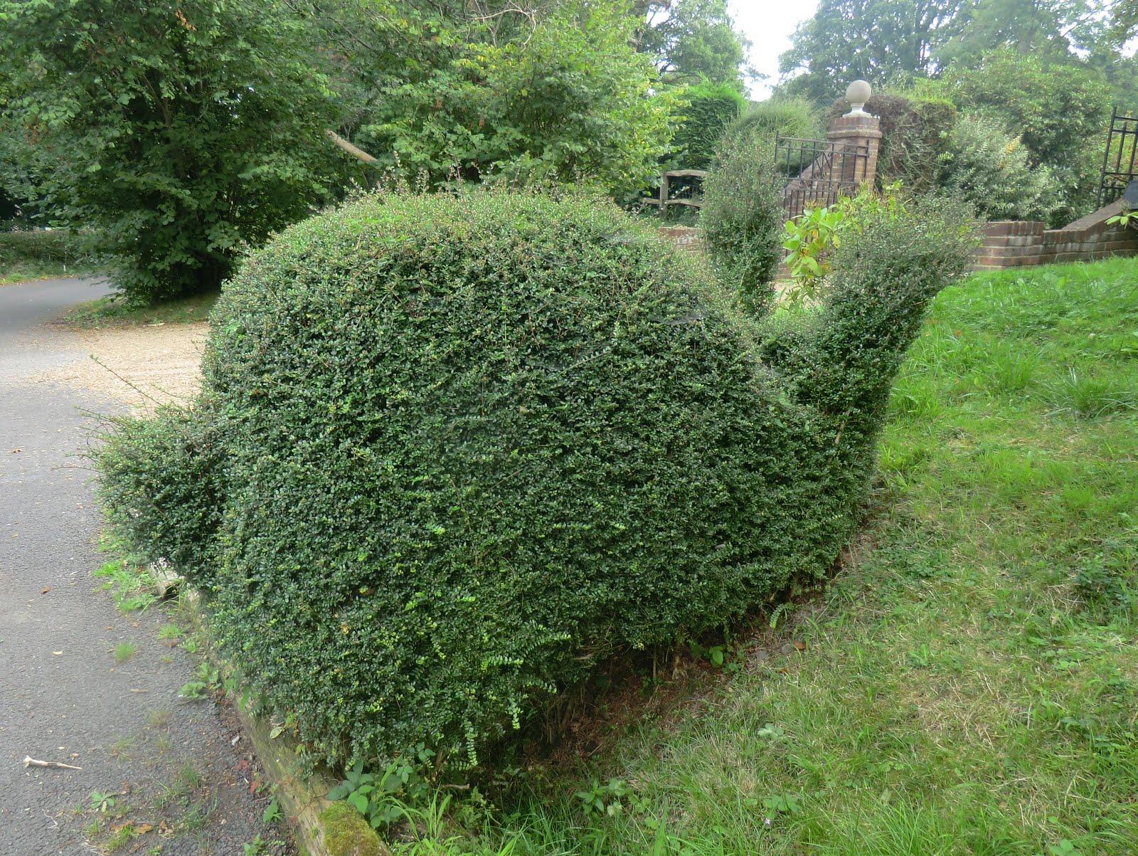 CIMG4631 Topiary, Sparks Lane