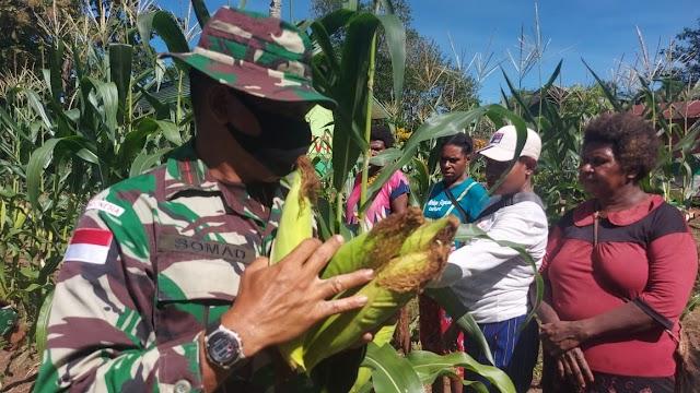 Hasil Program Ketahanan Pangan, Satgas Yonif 611/Awang Long Bersama Warga Papua Panen Raya Perdana