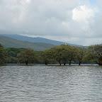 Como si fueran manglares