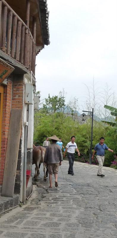 Chine .Yunnan,Menglian ,Tenchong, He shun, Chongning B - Picture%2B738.jpg