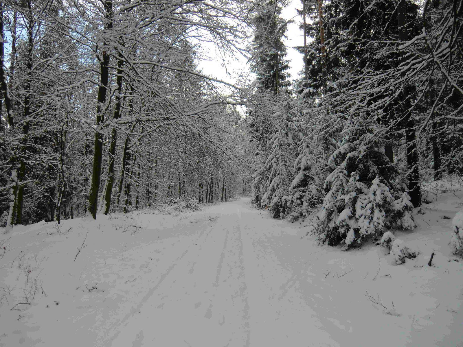 Schneetour zum Limousinhof.