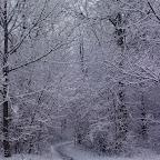Зимняя уборка в Дендрарии 033.jpg