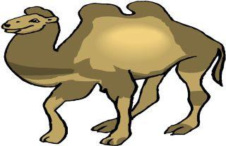 El camello bailarin