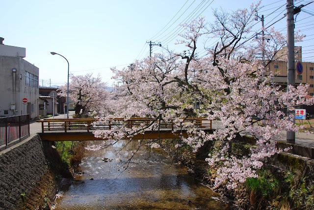 柿川桜吹雪   和興不動産 長岡 ...