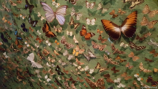 display of various species of butterflies on a large wall