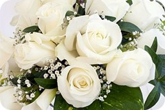 Rosas Blancas 15