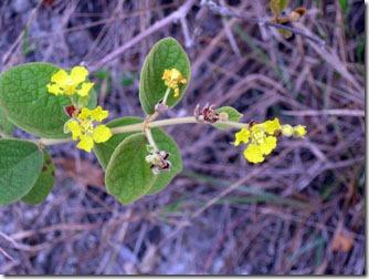 flores-silvestres-carrancas-2