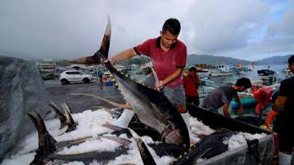 Perekonomian di Pelabuhan Perikanan Menggeliat di Masa Pandemi