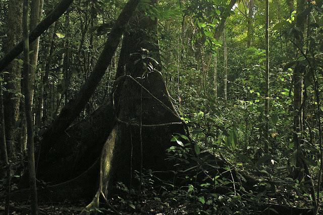 Sukau, lot n°2 (Sabah, Malaisie, Bornéo), 5 août 2011. Photo : J.-M. Gayman