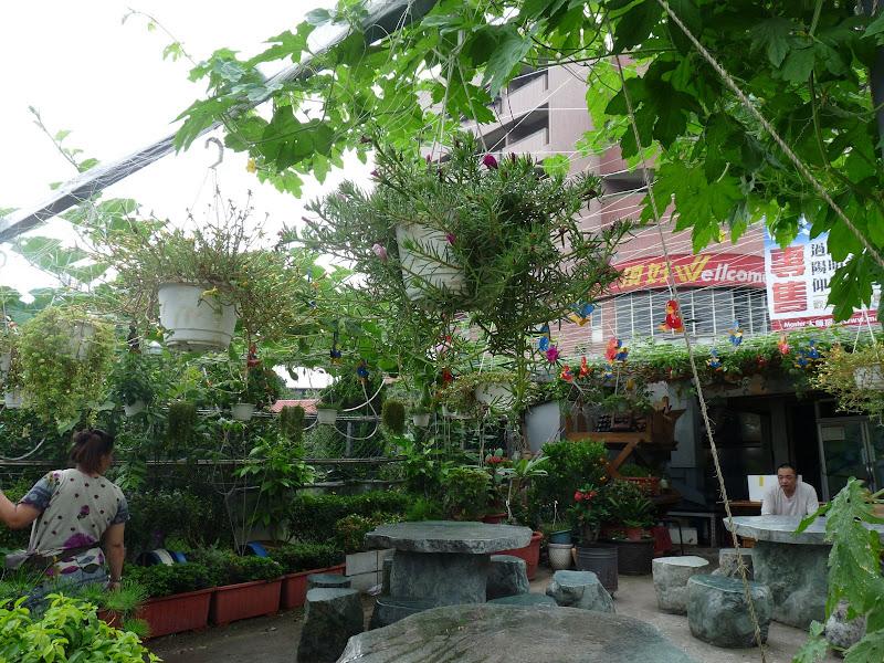 En marchant dans Yangmingshan, sur un filet poussent des plantes