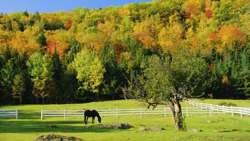 Grazing Horse in Autumn, Near Jackson, New Hampshire.jpg