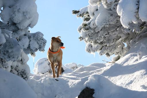 V snehovej bráne