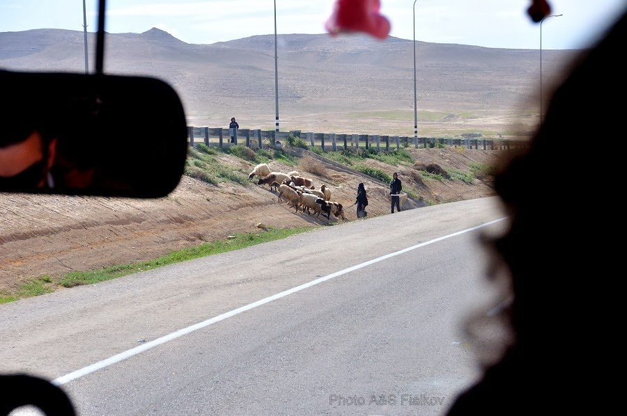 Фоторепортаж: гид Светлана Фиалкова, экскурсия в Негев, Бедуины.