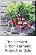 the harvest - urban farming project in oslo norway