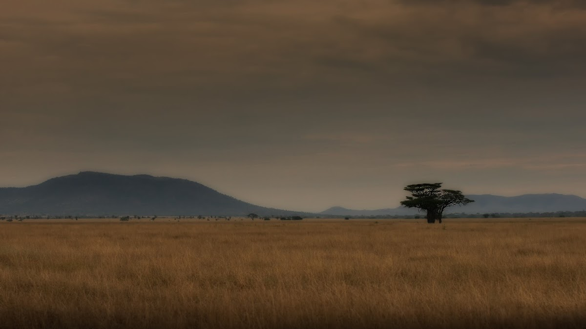 TanzaniaDSC03339.jpg