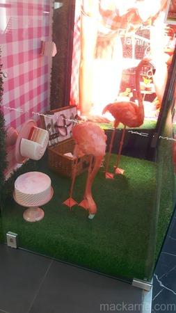 c_FlamingoPark4