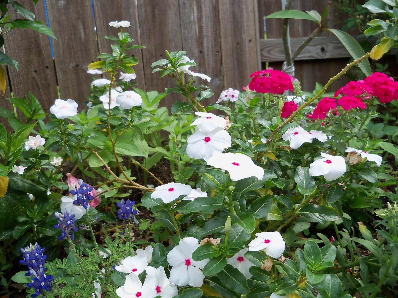 Gardening 2013 - 115_6010.JPG