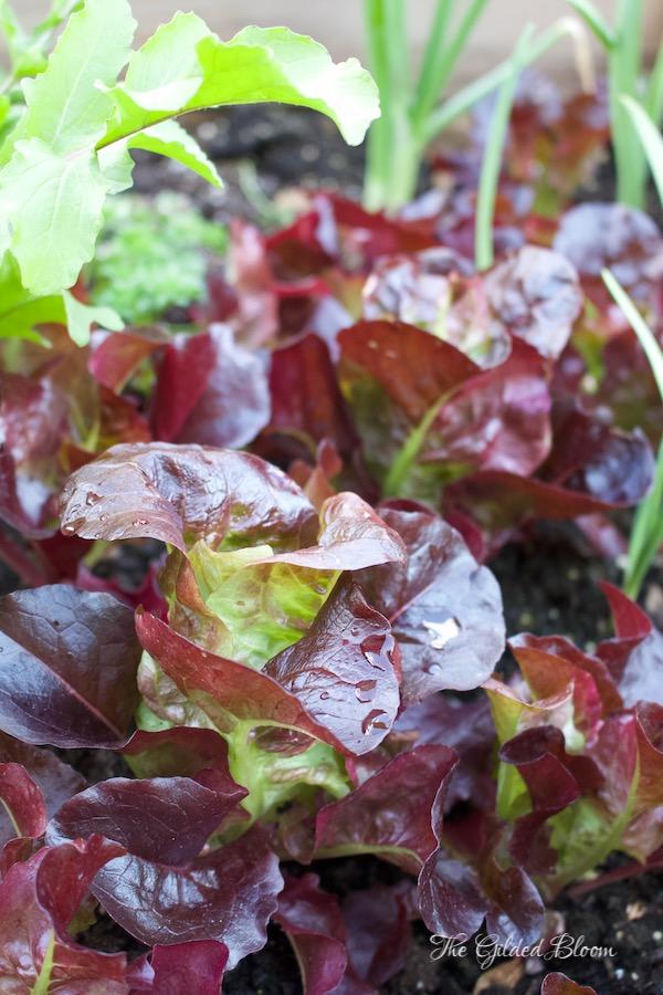 Winter Garden Delights- www.gildedbloom.com