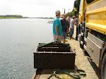 Een aantal leden van de duikclub de Bubble Mates hebben bij de loswal in Kessel aan de Maas een schoonmaakactie gehouden.