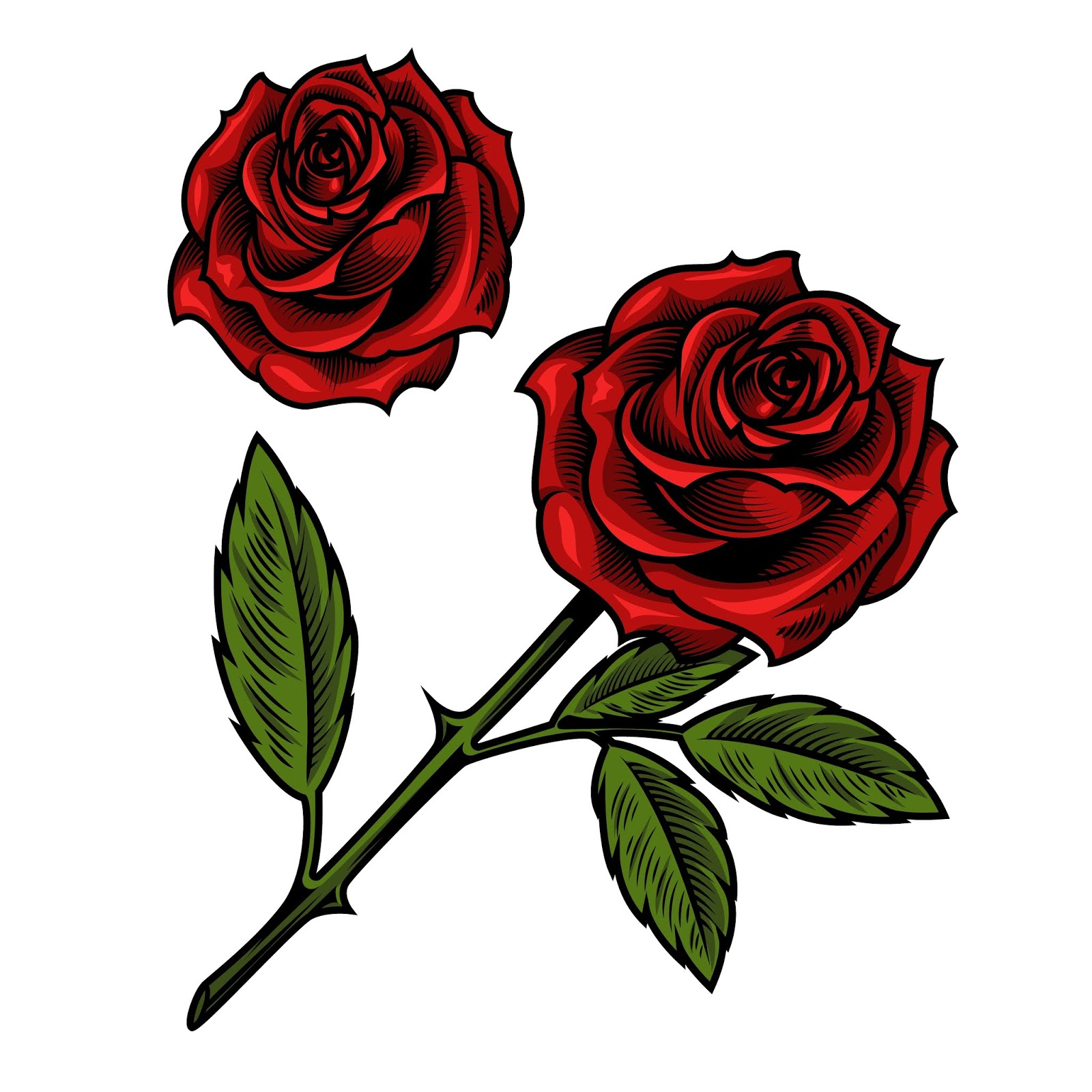 Single Beautiful Red Rose Free Download Vector CDR, AI, EPS and PNG Formats