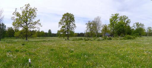 2015-06-01 006_005(Gotland)c.jpg