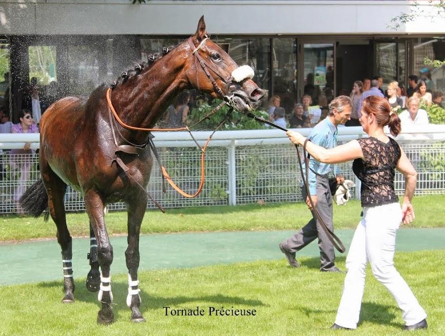 Photos Auteuil 8-06-2014  IMG_1815