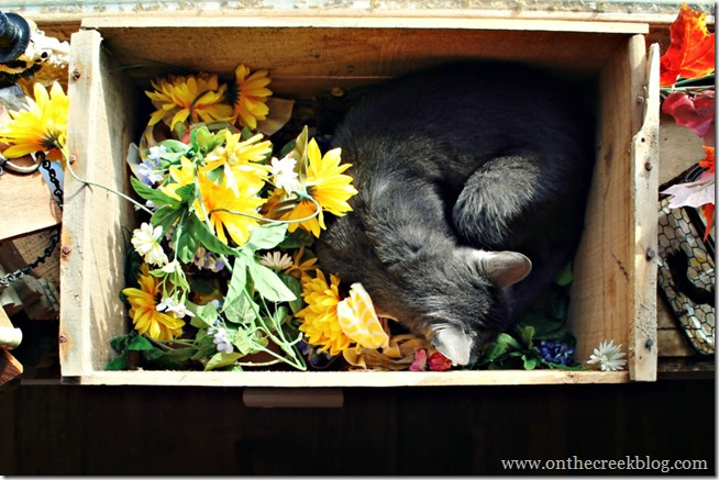Cat sleeping in wooden crate